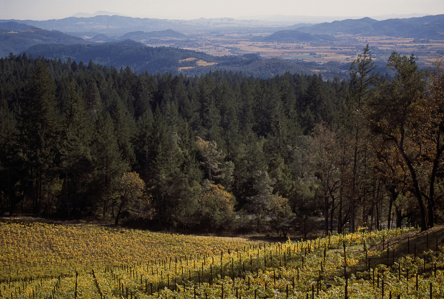Howell Mountain Vineyards