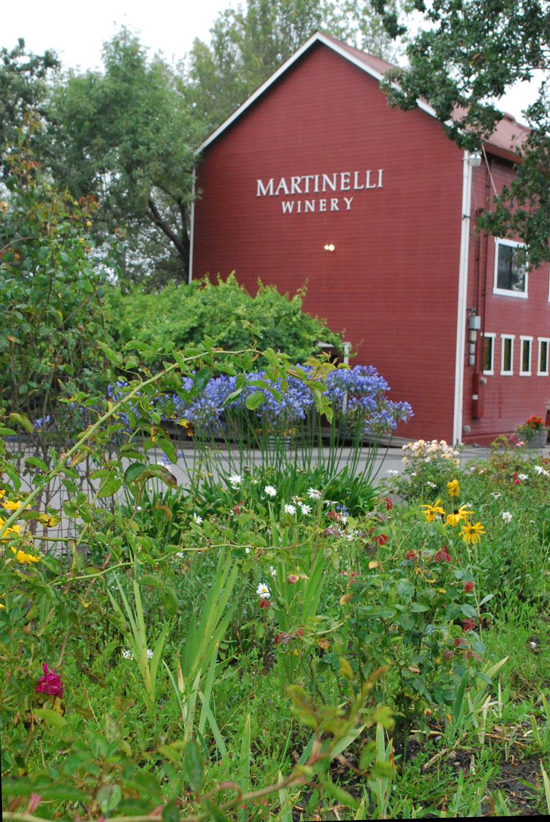 Martinelli Winery Tasting Room