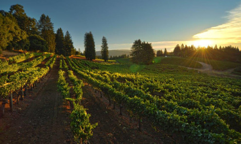 Kistler Vineyards